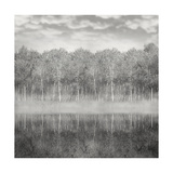 Woods And Fog Prints by  ValentinaPhotos
