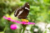 Butterfly Posters by  muangsatun