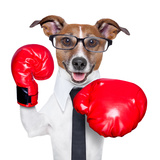 Boxing Dog Photographic Print by Javier Brosch