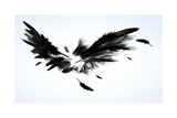Black Wings Reproduction giclée Premium par Sergey Nivens
