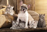Cat And Dog, British Kittens And French Bulldog Puppy In Retro Background Photographic Print by  Lilun