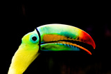 Toucan Photo by Minerva Studio