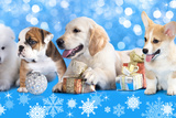 Puppies With Christmas Gifts Photographic Print by  Lilun