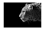 Leopard Portrait Prints by  Reddogs