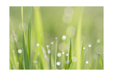 Green Grass Posters by  Yanika
