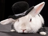 Portrait Of Cute Rabbit In Top Hat And Bow-Tie. Isolated On Dark Background Prints by  PH.OK