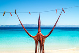 Octopus Hanging Up To Dry In The Sunshine In The Greek Islands Fotoprint van  papadimitriou