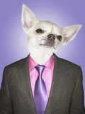 Chihuahua Dressed Business Man Posters by  Nosnibor137