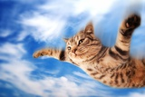Flying Funny Kitten Photographic Print by NejroN Photo