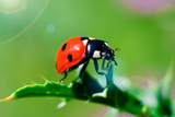 Ladybug Photographic Print by  gorielov