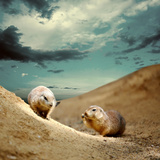Marmot Under Sky Photographic Print by  yuran-78