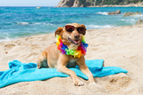 Relaxing Dog At The Beach With Flowers Garland Photographic Print by  Ivonnewierink