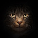Cat Face With Beautiful Eyes Close Up Portrait Posters by PHOTOCREO Michal Bednarek
