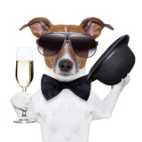Cheers Dog Photographic Print by Javier Brosch