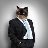 Funny Fluffy Cat In A Business Suit Businessman. Collage Prints by Sergey Nivens