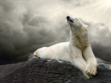 White Polar Bear Hunter On The Ice In Water Drops Print by  yuran-78