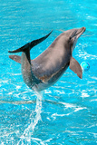Dolphin Plays In Pool Prints by PHOTOCREO Michal Bednarek