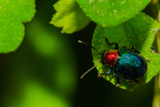 Green Bug Print by  amnachphoto