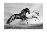 Horses Run Posters af mari_art