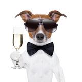 Cheers Dog Reprodukcja zdjęcia autor Javier Brosch