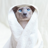 Hairless Cat In Towel Photographic Print by  AberratioN
