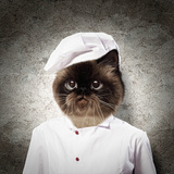 Funny Fluffy Cat Cook In A Robe . Collage Posters by Sergey Nivens