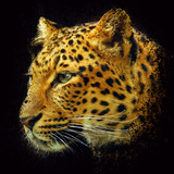 Leopard Photographic Print by  yuran-78