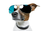 Dog With Funny Shades Prints by Javier Brosch