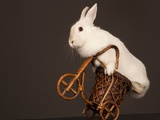 Photo Of Cute Rabbit Riding Bike. Isolated On Dark Background Prints by  PH.OK