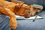 Dog Sleeping In Her Notebook After Studying Prints by  vitalytitov