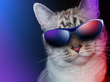 Cool Party Cat With Sunglasses Photo by  Angela_Waye