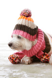 Dog Wearing Winter Woollen Clothing Posters by  lovleah
