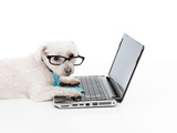 Business Or Educated Dog Using Compuer Posters by  lovleah