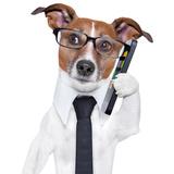 Smartphone Dog Reprodukcja zdjęcia autor Javier Brosch
