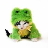 Kitten In Frog Suit Photographic Print by  graphicphoto