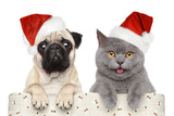 Dog And Cat In Red Christmas Hat Photographic Print by  Jagodka