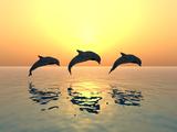 Jumping Dolphins Fotografisk tryk af MIRO3D