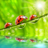 Funny Picture Of The Ladybugs Family Running On A Grass Bridge Over A Spring Flood Prints by  Kletr