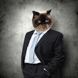 Funny Fluffy Cat In A Business Suit Businessman. Collage Photo by Sergey Nivens