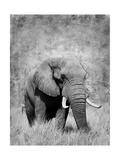 Elephant Print by  Donvanstaden