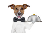 Dog Service Tray Photographic Print by Javier Brosch