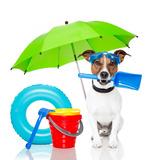 Dog Sunbathing With Air Mattress Poster by Javier Brosch