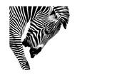 Striped Stallion Posters af SHS Photography