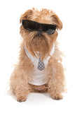 Dog With Sunglasses Photographic Print by  Okssi