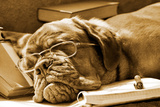 Tired Dog Sleeping At Her Lessons In Sepia Tone Reproduction photographique par  vitalytitov