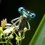 Blue Dragonfly On A Flower - Funny Portrait Photographic Print by  Kletr