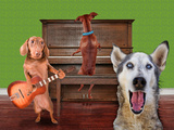 Funny Dog Card Photo by  graphicphoto