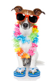 Tourist Dog With Hawaiian Lei And Shades Fotografisk tryk af Javier Brosch