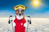 Skiing Dog Fotografía por Javier Brosch