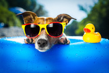 Beach Dog Photographic Print by Javier Brosch